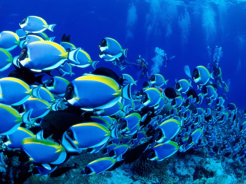 Cool Underwater Wallpapers | PCTechNotes :: PC Tips ...